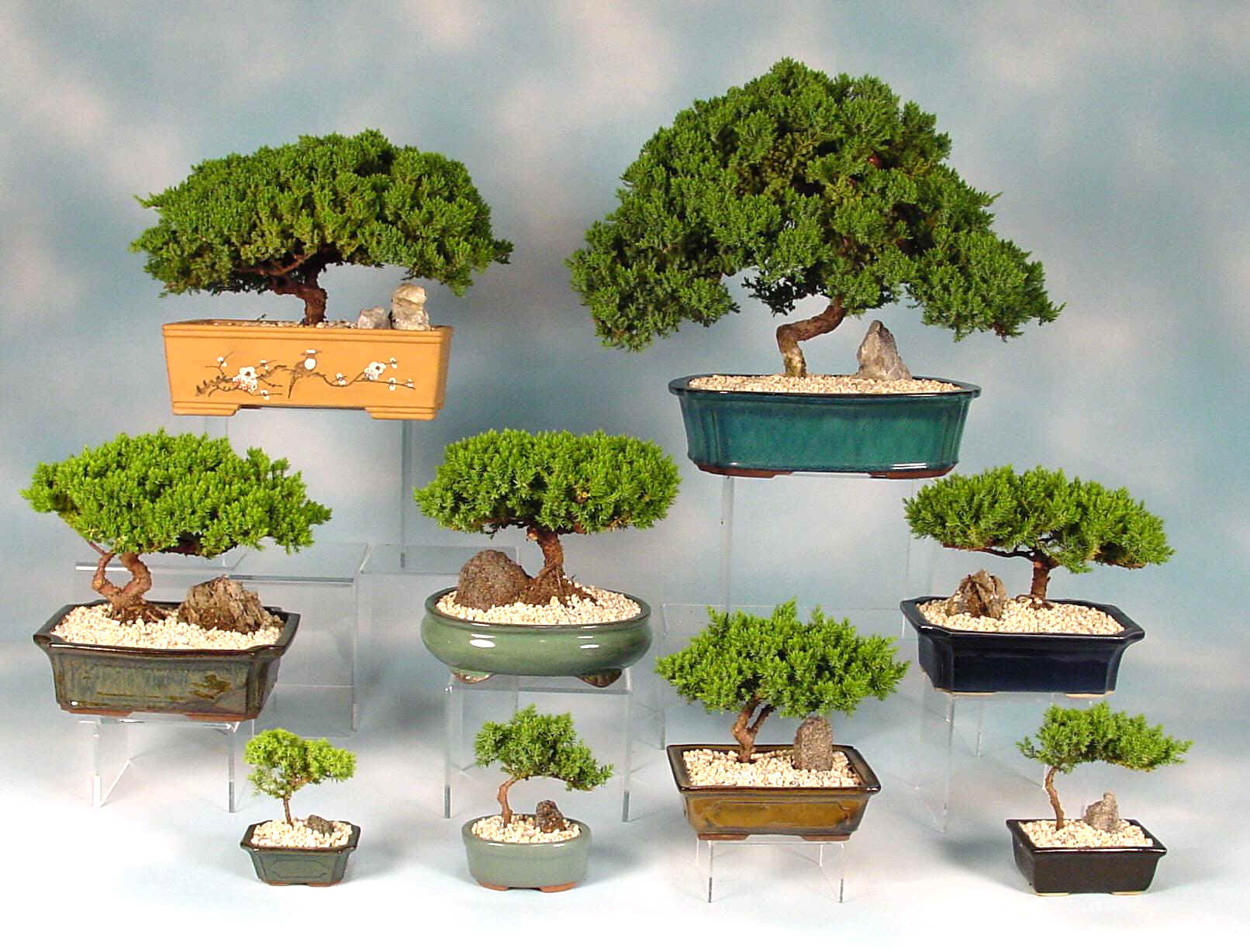 Decocasa en colombia interiores zen en busca del bons i for Bonsai de jardin