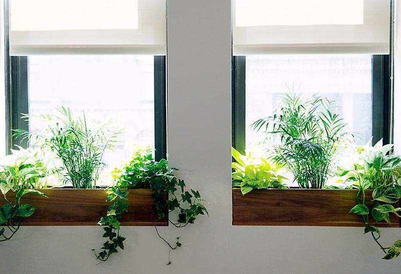 foto-ventana-macetero